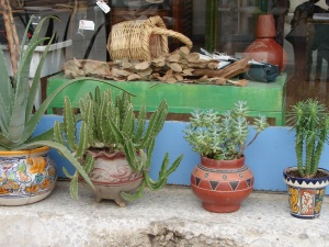 Kaktusi - mūsu izvēle.