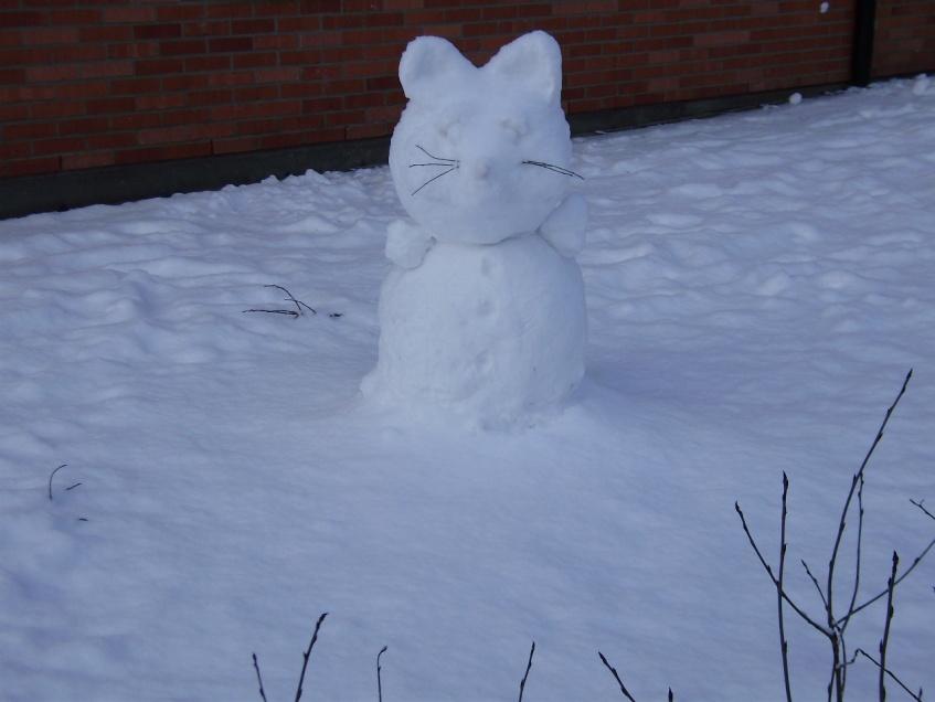Sniega kaķis. 27.01.2012.