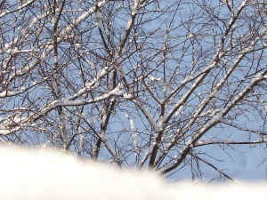 Ziema 2012. 04.02