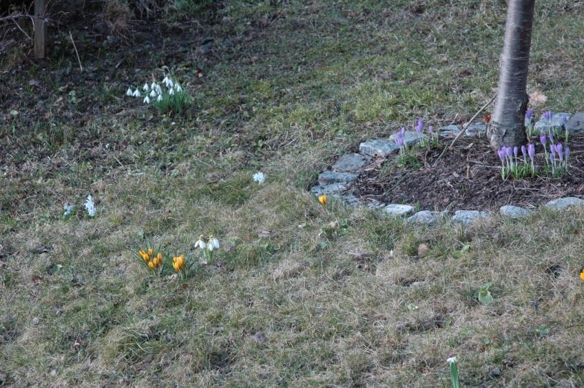 Pavasara ziedi. 2012. 19.03.