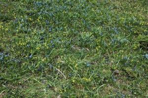 Ziedi pavasarī