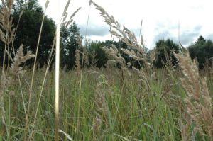 Burvīgās Zvārtavas pļavas