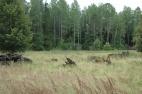 Žuldiņu pļavas