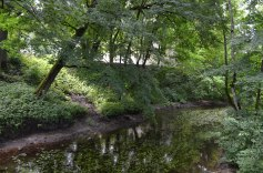 Koki, atspulgi, ūdenszāļu rapsodja