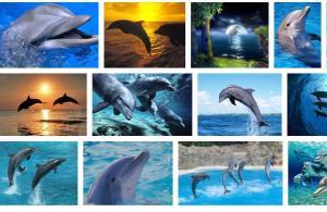 delfīni  -smaidošās zivis