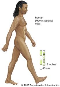 h-sapiens