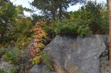 28.septembra mežs
