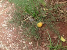 Citrons, kurš ļāva sevi fotografēt
