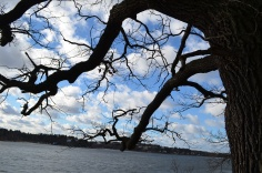 Jūras, ozols, foto Sandra Veinberga