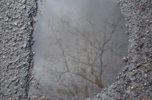 Koks peļķē, foto Sandra Veinberga