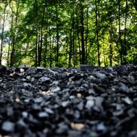 Latvijas atmežošana jeb meža genocīds! Lielas lietas notiek klusumā