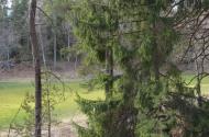 Mežs pavasarī 2014, foto Sandra Veinberga