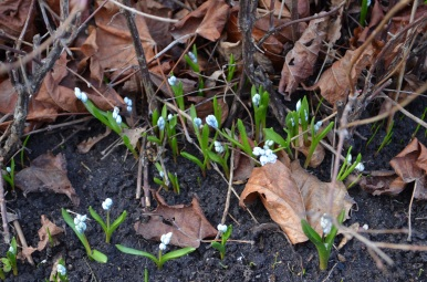 Pavasara zvaniņi, foto Sandra Veinberga