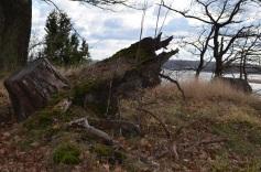 Pēc vētras. foto Sandra Veinberga