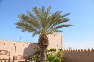 Omana 6
