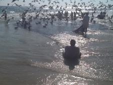Omana, zvejinei, kaijas