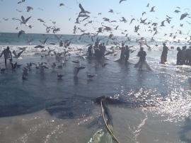 Omana, zvejnieki