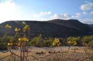 Omanas ainava