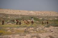gans, Sahāra