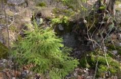Pavasara mežs