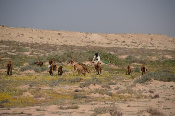 Sahāra, gans. S.Veinbergas foto