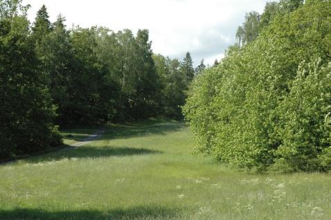 pļava un krūmi
