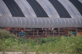 Govju kūts Korejā