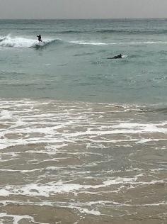 Lieliski viļņi