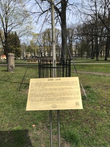 Rīgas Balzāma ozols